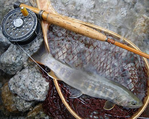 080815 Fishing1.jpg