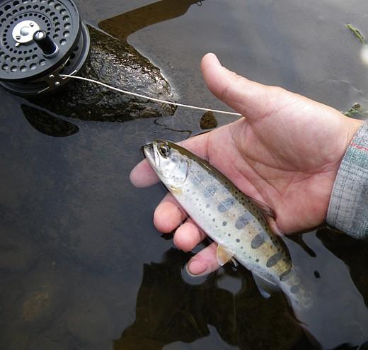 090424 Fishing.jpg