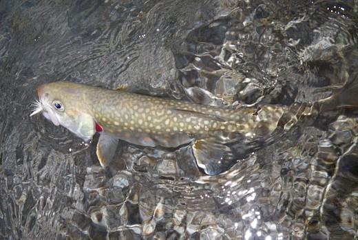 090920 Fishing.jpg