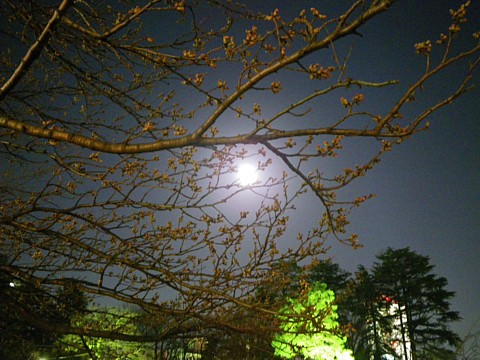 100330 Cherry&Moon.jpg