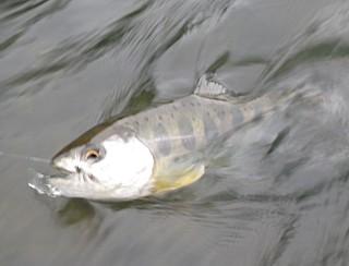 100530 Fishing ~1.jpg