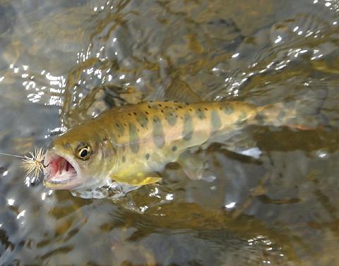 140426 Fishing ~1.jpg