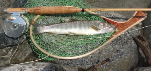 160618 Fishing.jpg