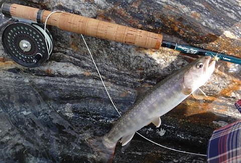 160710 Fishing ~2.jpg