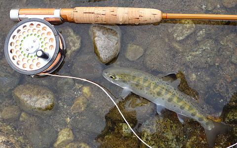170319 Fishing.jpg