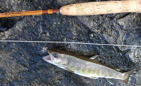 170505 Fishing I.jpg