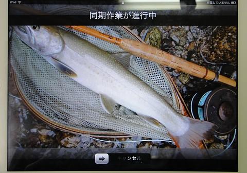 iPad 2 SyncoutBtn.jpg