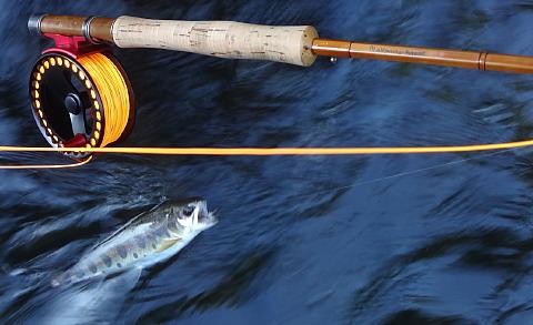150728 Fishing.jpg