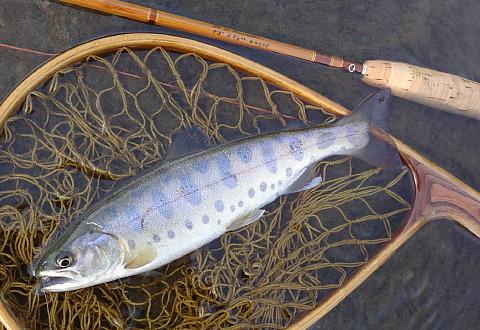 170504 Fishing.jpg
