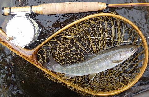 170617 Fishing ~1.jpg