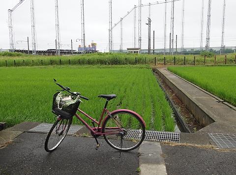 120622 Tsuyu.jpg