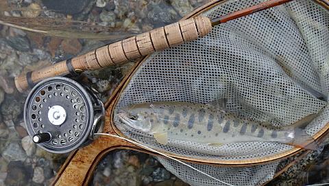 130517 Fishing.jpg