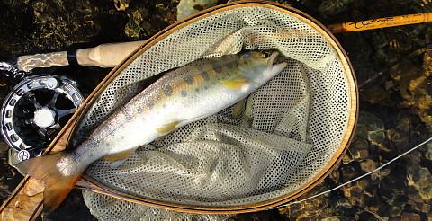140530 Fishing ~1.jpg