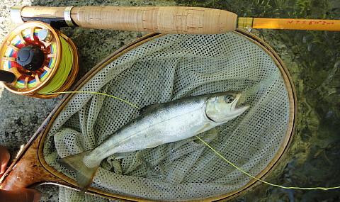 140601 Fishing.jpg