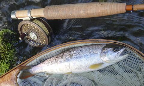 140629 Fishing.jpg