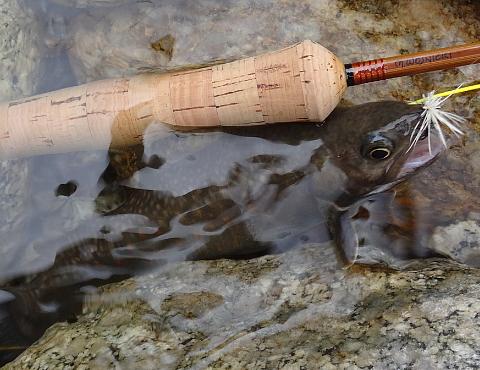 150919 Fishing ~4.jpg