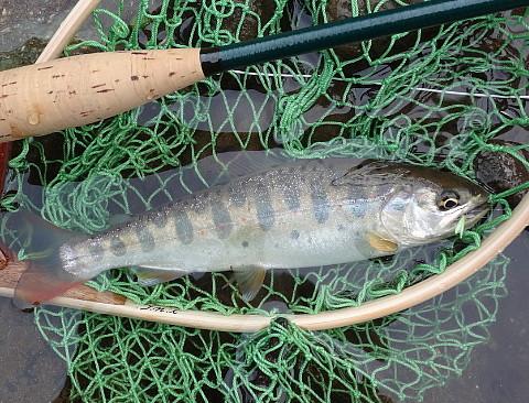 160416 Fishing ~1.jpg