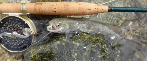 160611 Fishing.jpg