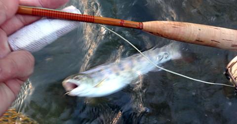 180526 Fishing ~1.jpg