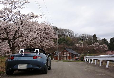 190408 Sakura ~0.jpg