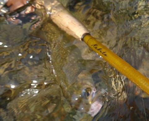 190526 Fishing ~1.jpg