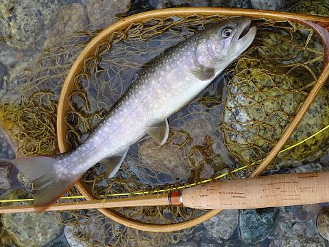 170618 Fishing ~3.jpg
